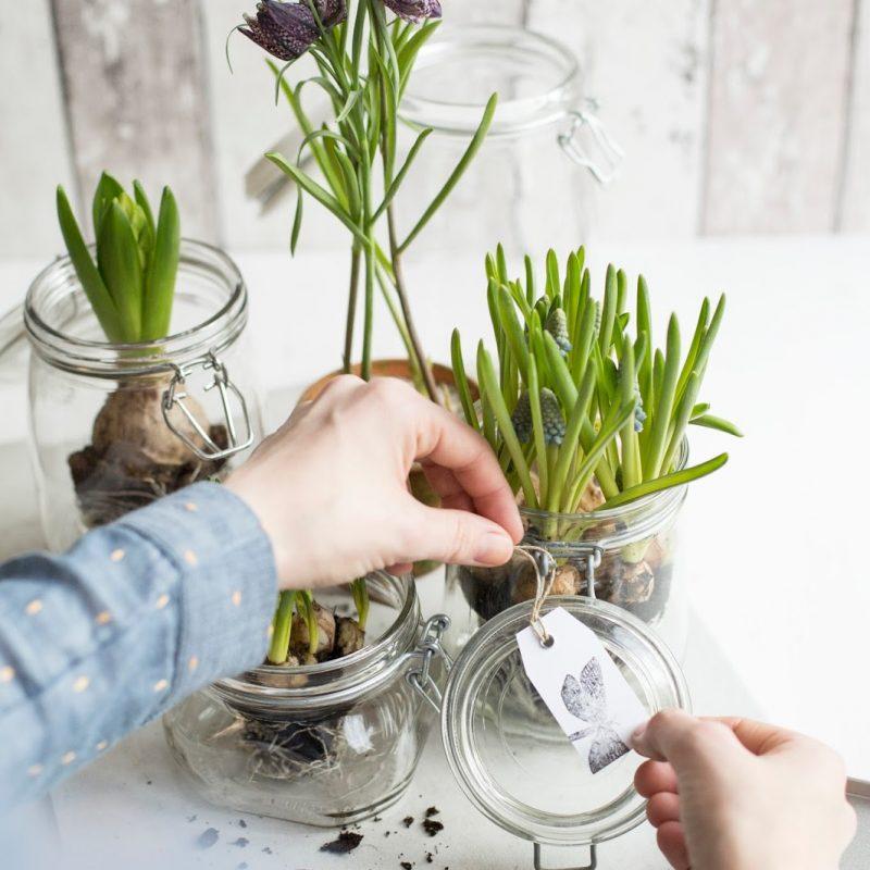DIY Frühlingsgarten für Zuhause