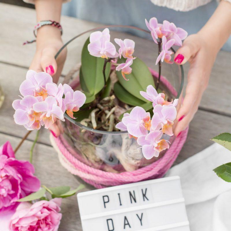 Pink Day – wunderschönes Orchideen DIY